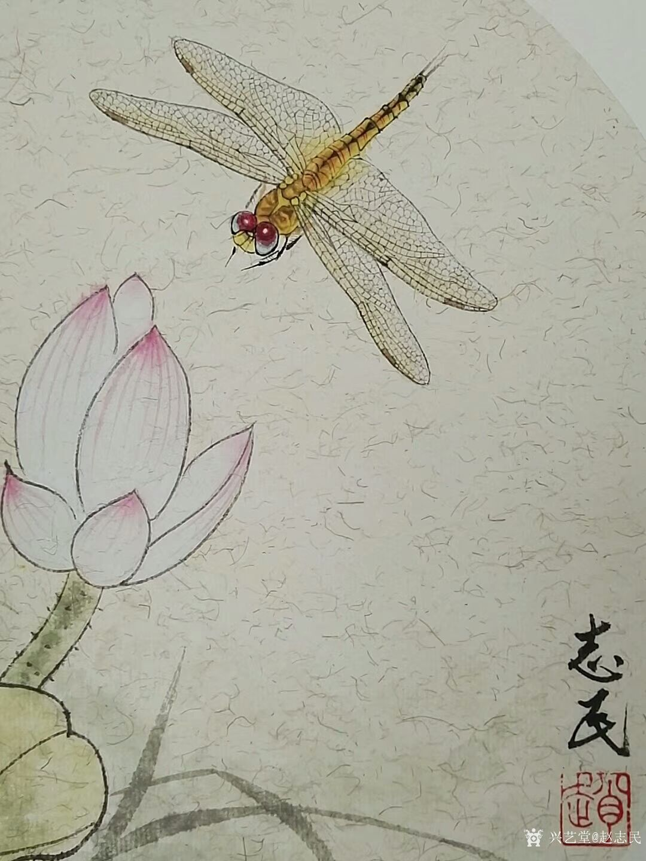 赵志民日记-工笔画蜻蜓:《小荷才露尖尖角,早有蜻蜓立上头.