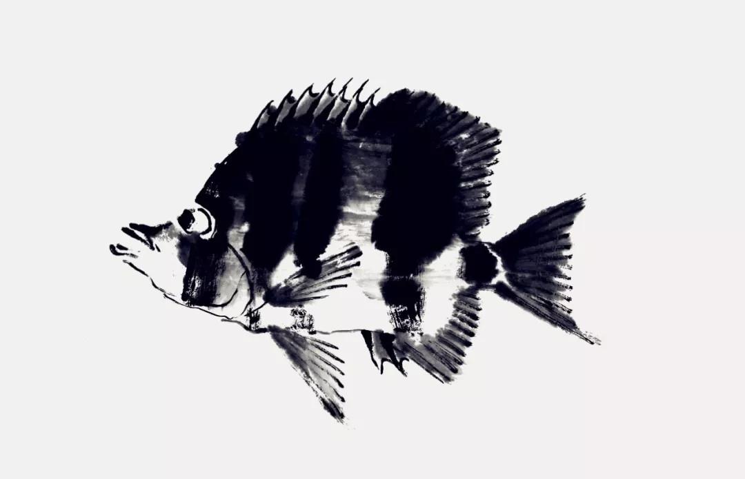 蝴蝶鱼画法