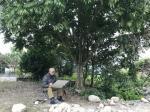 阎敏日志-罗浮山下,写生新得,国画山水,阎敏【图2】