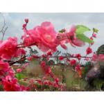 李沫池生活-爱生活,爱自己。春暖花开时节。【图4】