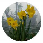 李沫池生活-爱生活,爱自己。春暖花开时节。【图3】