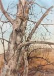 宋德发日志-水粉画小树林写生系列作品5幅,展示大自然的法则【图1】