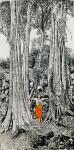 马培童日志-新年新作吴哥石窟焦墨画系列作品欣赏,今年春节前后二个多月每天【图2】