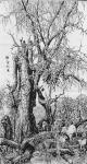 马培童日志-行万里路之六,胡扬~三千年的守候。去年到了内蒙胡扬林景区写生【图5】