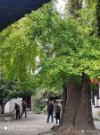 徐家康藏宝-扬州八怪纪念馆之所以选择位于驼铃巷的西方寺,只因后院是金农晚【图4】