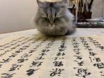 石广生日志-猫大师望着练字手稿端详了半天,默不作声,没有表态。看来是退步【图1】