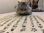 石广生日志-猫大师望着练字手稿端详了半天,默不作声,没有表态。看来是退步【图2】