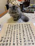 石广生日志-猫大师望着练字手稿端详了半天,默不作声,没有表态。看来是退步【图4】