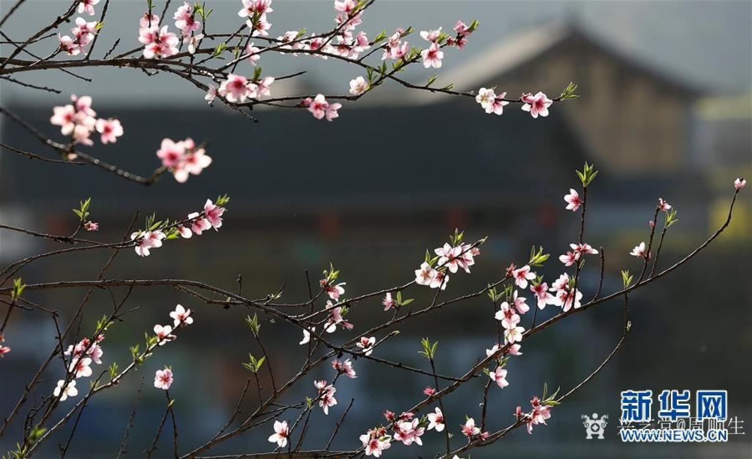 周顺生国画作品《四尺叠彩桃红总是春》【图4】