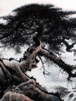 艺术家罗树辉日记:国画山水松树作品《山静松声远,秋清泉气香》;尺寸六尺整纸18【图3】