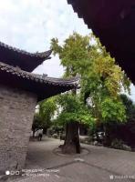 艺术家徐家康收藏:扬州八怪纪念馆之所以选择位于驼铃巷的西方寺,只因后院是金农晚【图1】