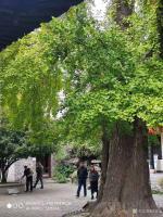 艺术家徐家康收藏:扬州八怪纪念馆之所以选择位于驼铃巷的西方寺,只因后院是金农晚【图3】
