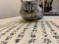 艺术家石广生日记:猫大师望着练字手稿端详了半天,默不作声,没有表态。看来是退步【图0】