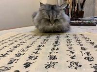 艺术家石广生日记:猫大师望着练字手稿端详了半天,默不作声,没有表态。看来是退步【图1】
