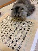 艺术家石广生日记:猫大师望着练字手稿端详了半天,默不作声,没有表态。看来是退步【图2】