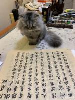 艺术家石广生日记:猫大师望着练字手稿端详了半天,默不作声,没有表态。看来是退步【图3】