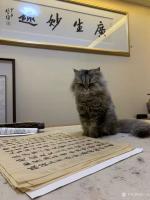 艺术家石广生日记:猫大师望着练字手稿端详了半天,默不作声,没有表态。看来是退步【图4】