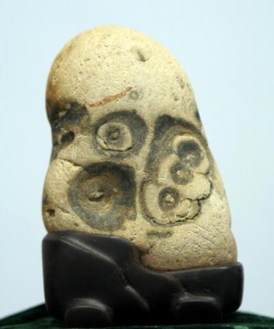 陶文祥收藏-规格:12★7★5cm 这一块石头的奇特之处在于:正面酷似熊掌,趾印分明,背面【图1】