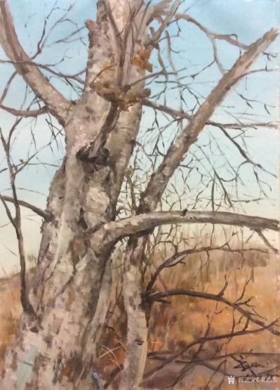 宋德发日记-水粉画小树林写生系列作品5幅,展示大自然的法则【图1】