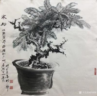 罗树辉日记-四尺斗方国画《寒杉》 ,去年游张家界,发现到处都是茂盛的寒杉。找了一小段寒杉,从【图1】