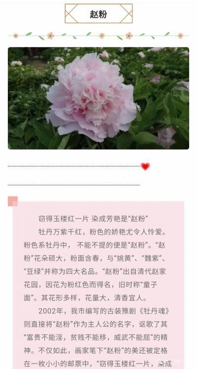 马晓薇日记-花卉写生工笔画牡丹十二品——赵粉,网课示范作品。【图4】