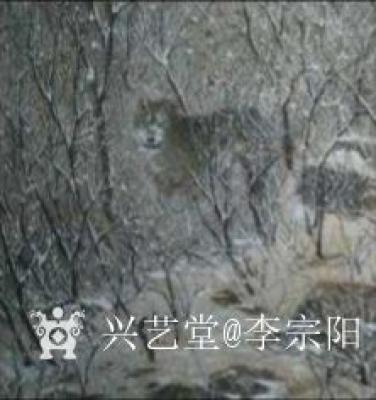 京门闲客.李宗陽兴艺空间精选封面动态图片